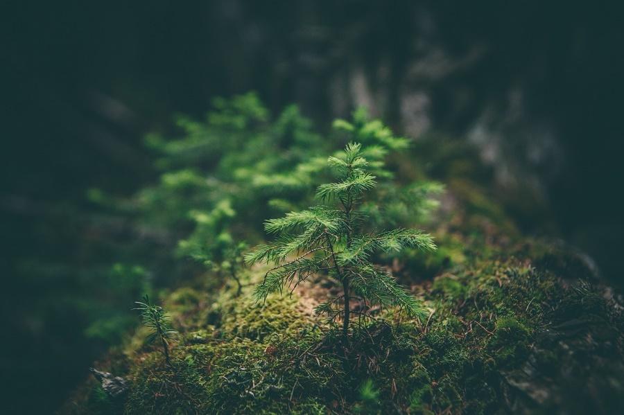 Way to grow: 4 vital skills for 2017 [Opinion]