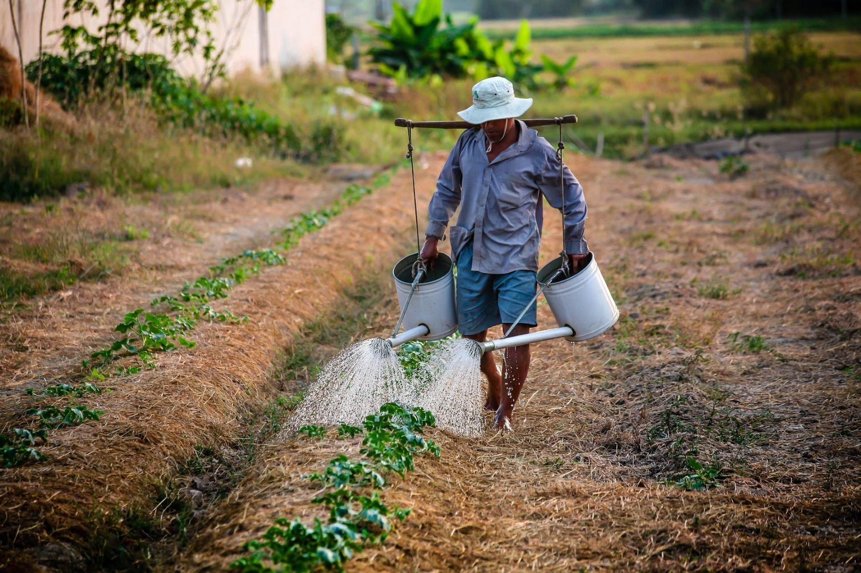 غوركم الأردنيّة تعزز أرباح صغار المزارعين عبر التكنولوجيا