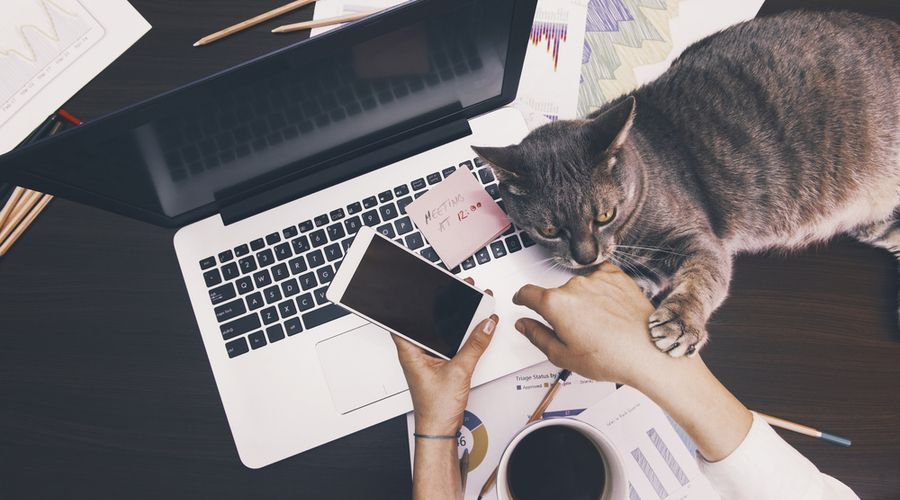 Will Remote Working Become The New Normal Wamda