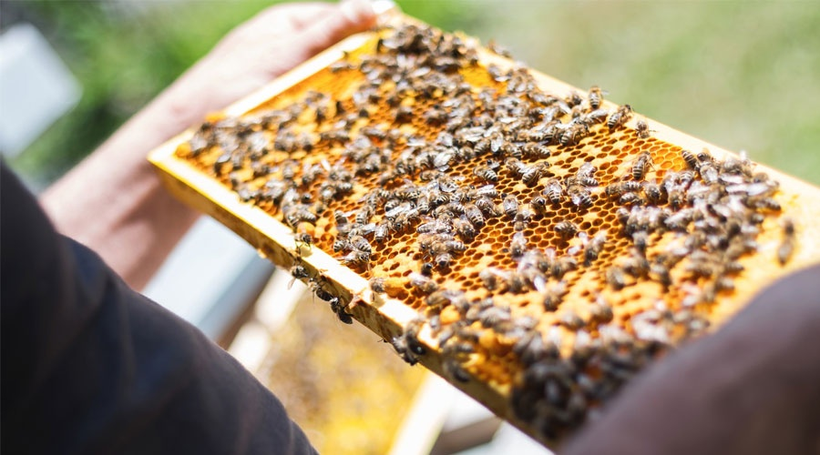 Insect-based technologies: How buzzing is lending a hand