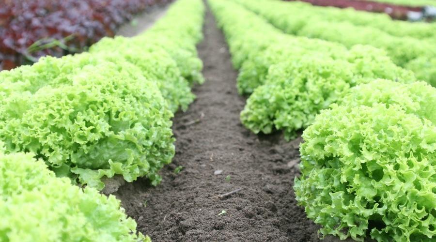 تكنولوجيا أردنية تسعى لحلّ مشكلة الغذاء لدى المليارات المتزايدة من البشر