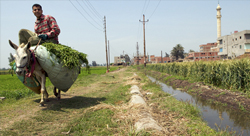 Building Egypt's biogas market