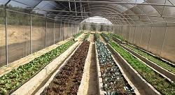Reclaiming Egypt's rooftops: Al Bustani reaps urban farm profits