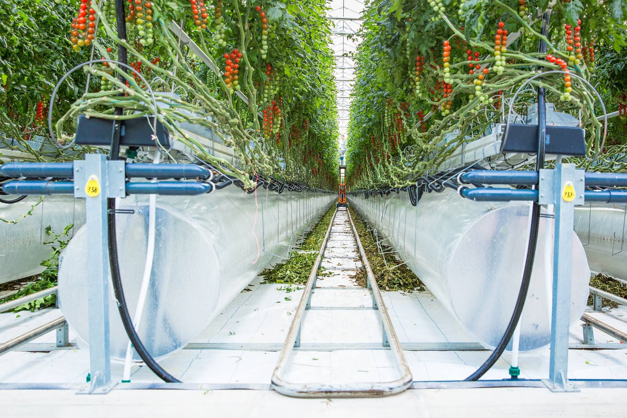 Smart farming for food security