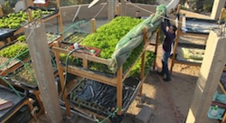 Schaduf Sows Sustainable Development with Rooftop Farming in Egypt
