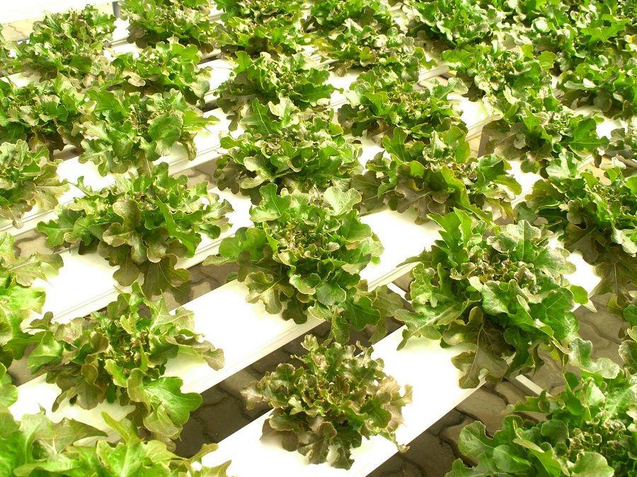 Hydro Farms raises fresh funds