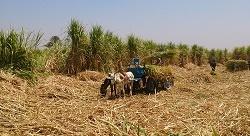 3 failures and a job: how Bio Energy Egypt hit success