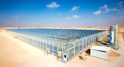 Oman explores solar-powered oil recovery